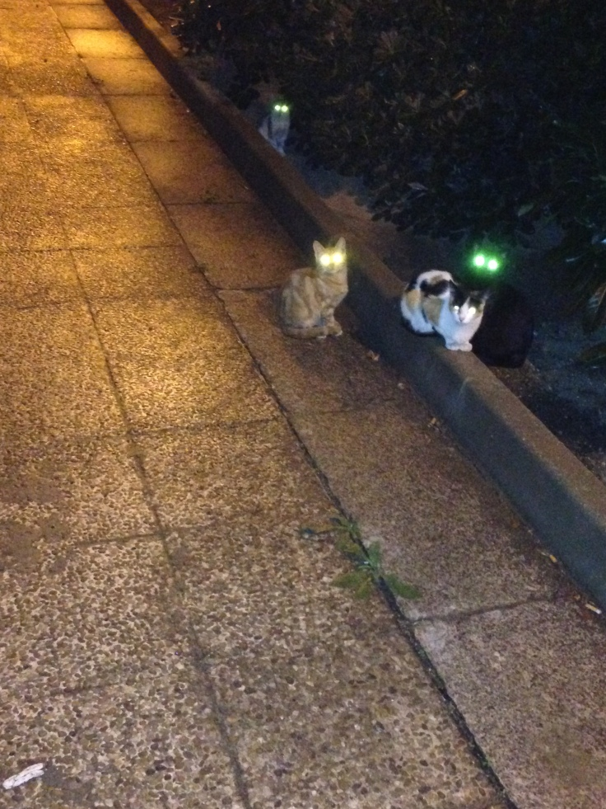 gatos demonio